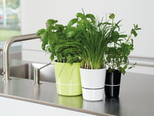Banner, product category: Herbage pots
