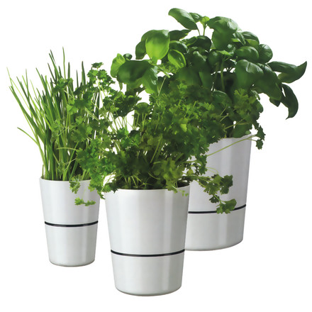 Rosti Mepal - Hydro Herb pot - Group