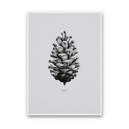 Paper Collective - Nature 1:1 Pine Cone (grey)