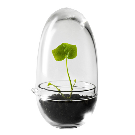 Catalogue cut out: Grow Mini Greenhouse