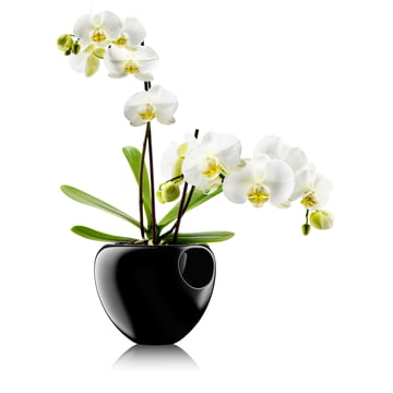 Eva Solo - Orchid Pot, black