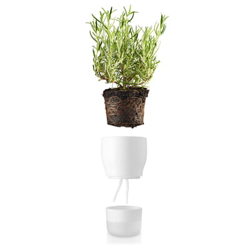 Self-watering Herb Pot by Eva Solo
