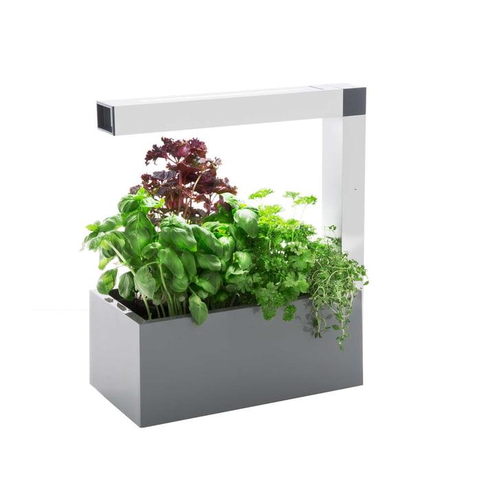 Herbie Herb Garden By Tregren In The Shop
