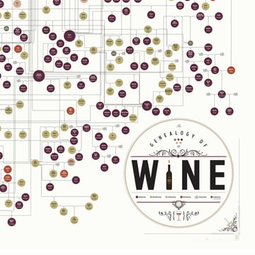 Pop Chart Lab - The Genealogy of Wine